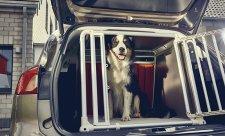 Třetina řidičů vozí psa na volno