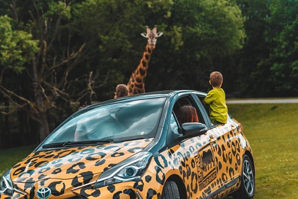 Na výlet do divočiny hybridní Toyotou